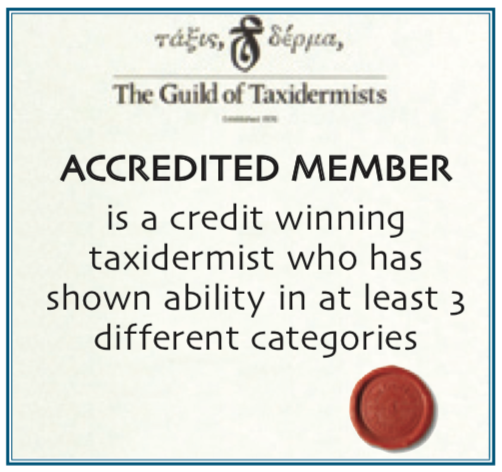 Accredited Taxidermist